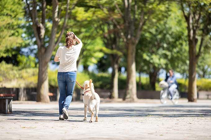ペットに財産を相続できる?  世話を依頼する方法や相続税についても解説