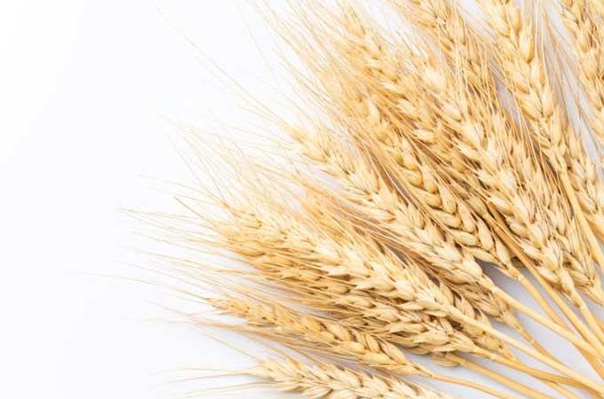 輸入小麦大幅値上げで気になる  「政府売り渡し価格」って?